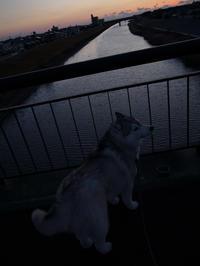 朝の定番 (*^_^*) - 犬連れへんろ*二人と一匹のはなし*