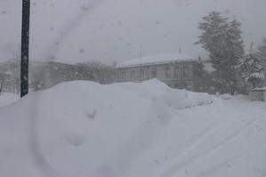 米沢キャンパスの昼は猛吹雪1月23日(大寒・初候)款冬華さく(ふきのはなさく) - 米沢より愛をこめて・・