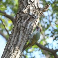 北風の里山 - TACOSの野鳥日記