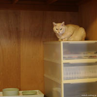 押入れのポンコ - 賃貸ネコ暮らし|賃貸住宅でネコを室内飼いする工夫