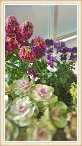 早春の寄せ植え - 季節の花とお菓子のある暮らし