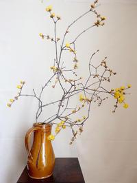 ロウバイ - 暮らしと植物のブログ
