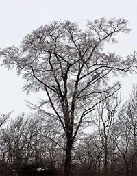 【北の雪原 霧氷がつくる冬の花】 - 性能とデザイン いい家大研究