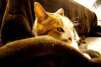 普通の猫になる(自由部門) - COMPLEX CAT