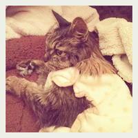 22才 ご長寿猫 はんぞう との暮らし 「1月11日~1月15日の はんぞう」 - たびねこ