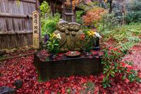 京都の紅葉2016 直指庵の散り紅葉(写真部門) - 花景色-K.W.C. PhotoBlog