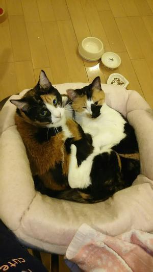 まこちゃんとりょうちゃん - 猫たちと母と私の日常