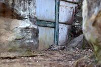 隠れ家 - 動物園へ行こう