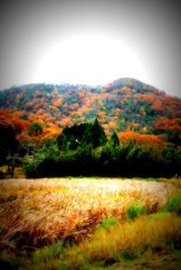 田舎暮らし根性いります - 人生は長い詩のようなもの × facebook
