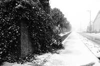 いつもの道が吹雪です! - Yoshi-A の写真の楽しみ