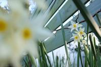 庭とカメラ - お庭のおと