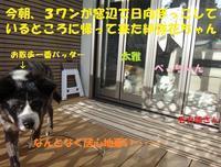 紗弥花ちゃんの嘆き・・・ - もももの部屋(家族を待っている保護犬たちと我家の愛犬のブログです)