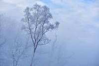 毛嵐と霧氷 - やぁやぁ。