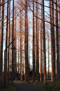 日暮れ前の水元公園散策。。 - 一場の写真 / 足立区リフォーム館・頑張る会社ブログ