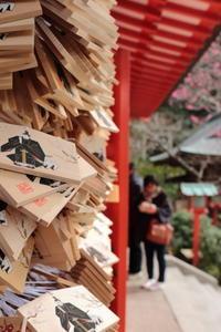 鎌倉散歩 - お散歩=lugarfoto