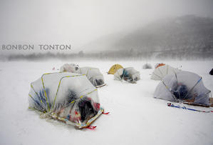 烈風 vs カタツムリ - ぼんぼんトントン写真