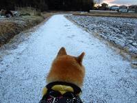 ちょっとだけ雪が - マルちゃん日記