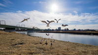 獣聚鳥散 - 幸せな写真時間
