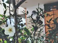 梅が咲いた~☆2017年賀状の失敗談 - ケセラセラ~家とGREEN。