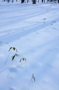 冬の戦場ヶ原-6 - 自然と仲良くなれたらいいな2
