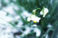雪の朝 - koharu*biyori