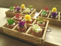 ミニチュア鉢植えセット。 - 手作り雑貨&観葉植物 kinomi