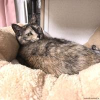 キューちゃん便秘プチ対策 - 賃貸ネコ暮らし|賃貸住宅でネコを室内飼いする工夫