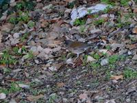 近所の公園で - 鳥撮り日記