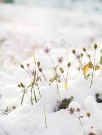 雪解けまで (写真部門) - 果実な日々