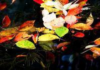 弘前公園の秋2016 No.1 - ウリサジンブログ