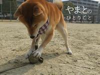 ボール遊び -玉乗り?編-【動画あり】 - yamatoのひとりごと