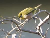 カメラの練習、我が家にやって来る野鳥を撮ってみた - Out of focus ~Baseballフォトブログ~