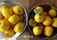 柚子マーマレード - Pistachio green