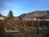 2016年 南チロルへクリスマスマーケットの旅! ~ メラーノのワイナリー&ビール醸造所FORST(旅行・お出かけ部門) - La Tavola Siciliana  ~美味しい&幸せなシチリアの食卓~