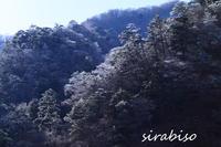 凍る森 - 小さな森の写真館 (a small forest story)