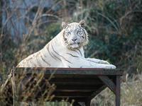 1月26日(木) バースディプレゼント - ほのぼの動物写真日記