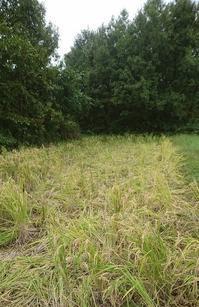 イノシシ被害 - Classic Farm