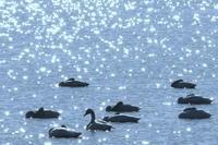 沼めぐり - 野鳥メモ
