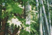 緑 - mitakamo