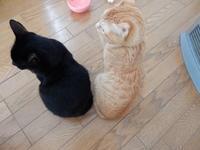 ヒーター・バディ - 愛犬家の猫日記