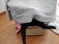 椅子物語w - 愛犬家の猫日記