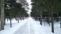 冬の北海道旅行 その1(北大研究林 ハシブトガラ、ヒガラ、シジュウカラ、ヒヨドリ) - 夫婦でバードウォッチング
