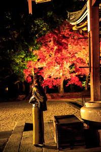 紅葉2016! ~仁和寺ライトアップ~  (写真部門) - Prado Photography!