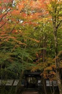 「地蔵院」京都2016秋の想出帖から (旅行・お出かけ部門) - 雲母(KIRA)の舟に乗って