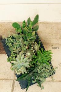 四方見の寄せ植え - CHIROのお庭しごと