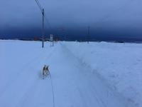 大荒れ!強風注意☆ - 柴犬さくら、北国に生きる