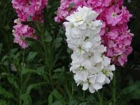 ストック - 今日の花