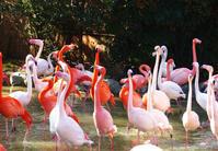 動物園 - 彩々 花 海