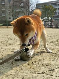 ボール遊び -得意技はトラップ編-【動画あり】 - yamatoのひとりごと