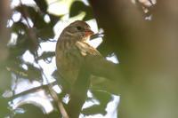 クロジを良く見かける冬 - 野鳥写真日記 自分用アーカイブズ